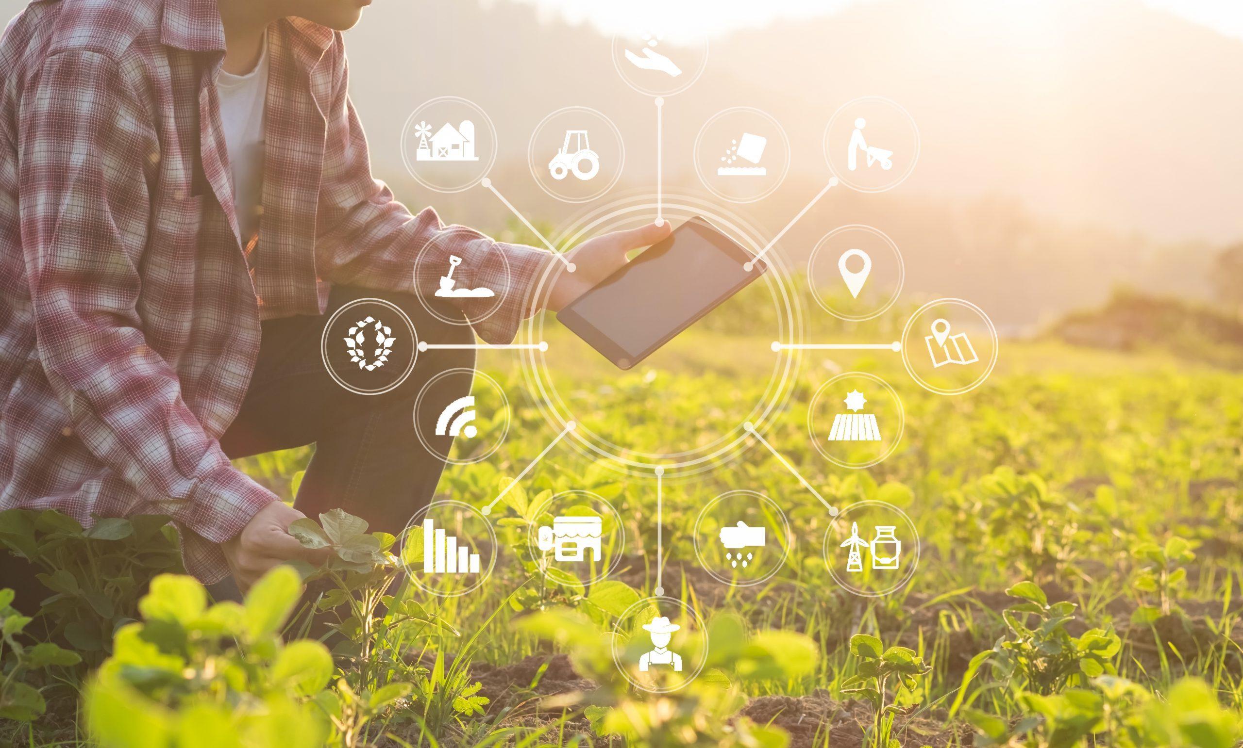 Bauer hockt in einem Sonnigen Feld. Sein Tablet offenbart ihm umfassende landwirtschaftliche Daten.